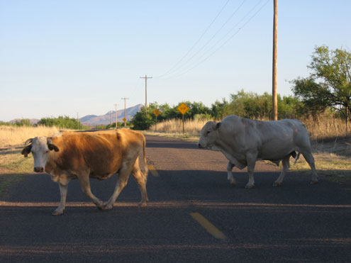 In Arizona, one must fence cattle out! Cattle ranchers are not required to fence cattle in.