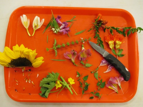 Dissecting seeds/flowers at Seed Saving workshop.