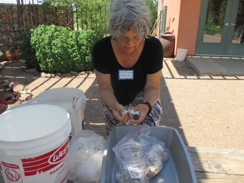 Separating cotton from its seeds at Tucson's Native Seed Search workshop.